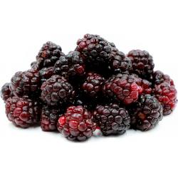 Boysenberries / Boysenberry