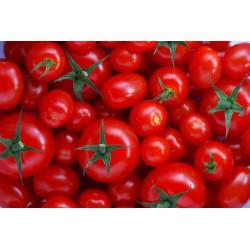 Sprayfree Tomatoes