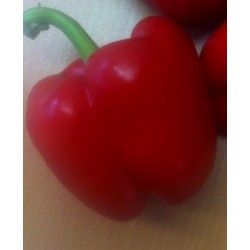 Pepper Red Small