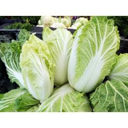 Chinese Cabbage / Wongbok
