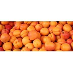 Apricots 10 KG Box