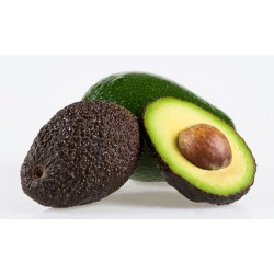 Avocado 5 pack small