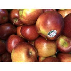 Apple Jazz 1.5 KG