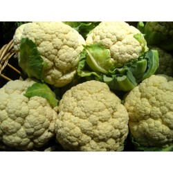 Cauliflower- Purple
