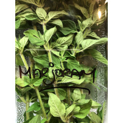 Herbs Marjoram Spray free .10 gm