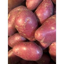 Potatoes Maris Anchor 2 kg new seasons